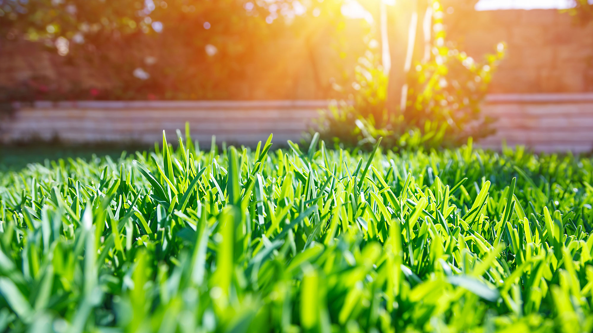 Leave your lawn care to the professionals at JR Flores Landscape Services.